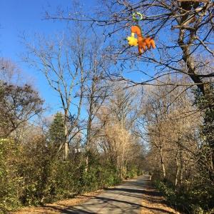 monon trail